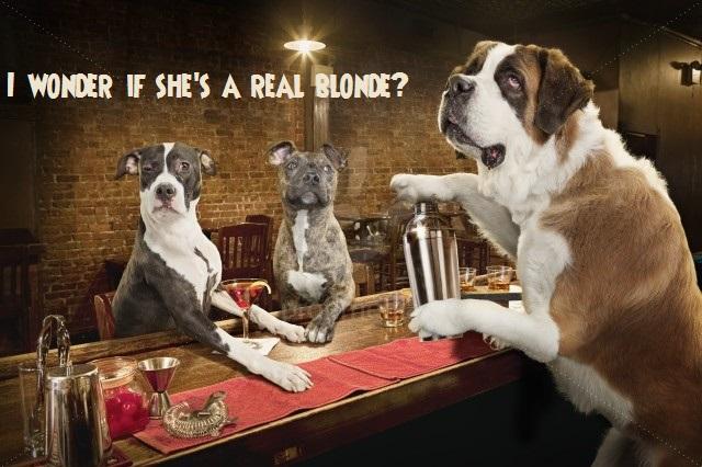 Three dogs drinking in bar