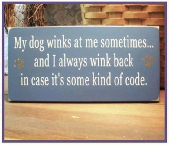 ajuly2 dog winks