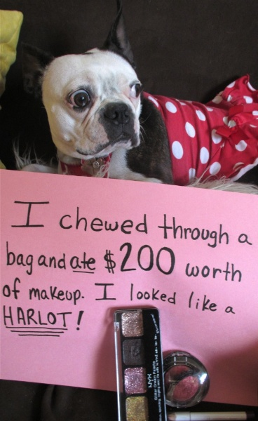 Pet Shaming At Its Best I M Just Sayin