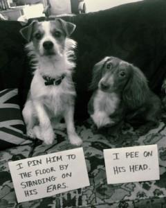pet shaming3