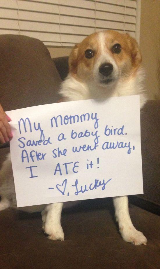 Pet Shaming At Its Best I M Just Sayin