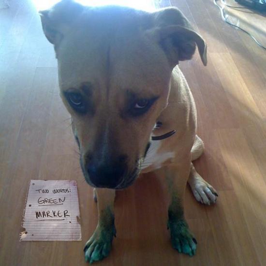 Pet Shaming at its best. - I'm Just Sayin