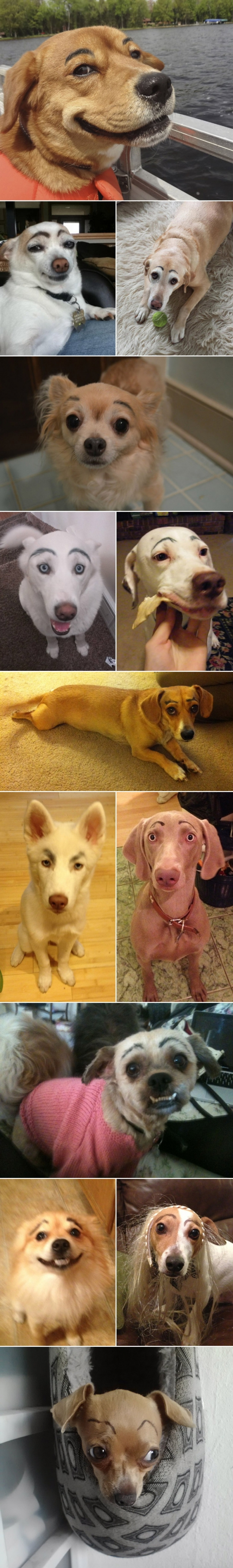 small_dogs with eyebrows