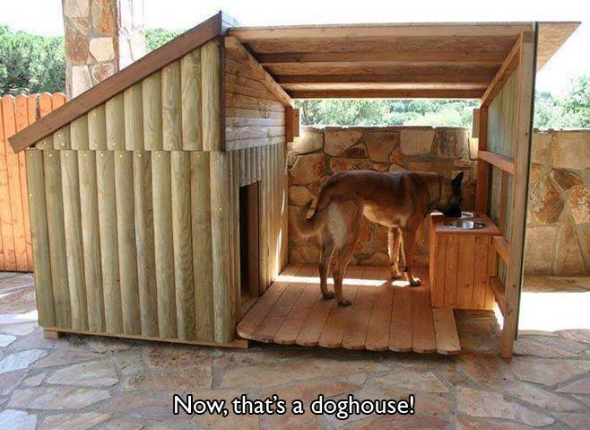 awesome-pet-owners-07