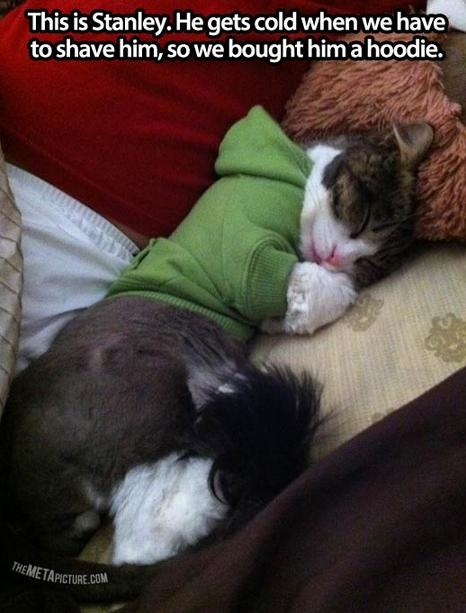 awesome-pet-owners-11