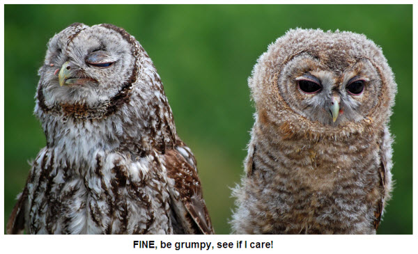 owl 111