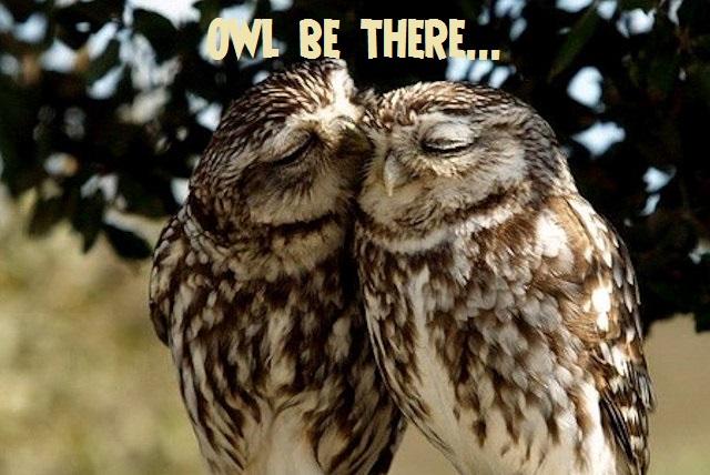 owl24