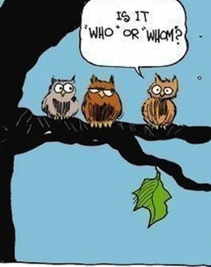 owl25
