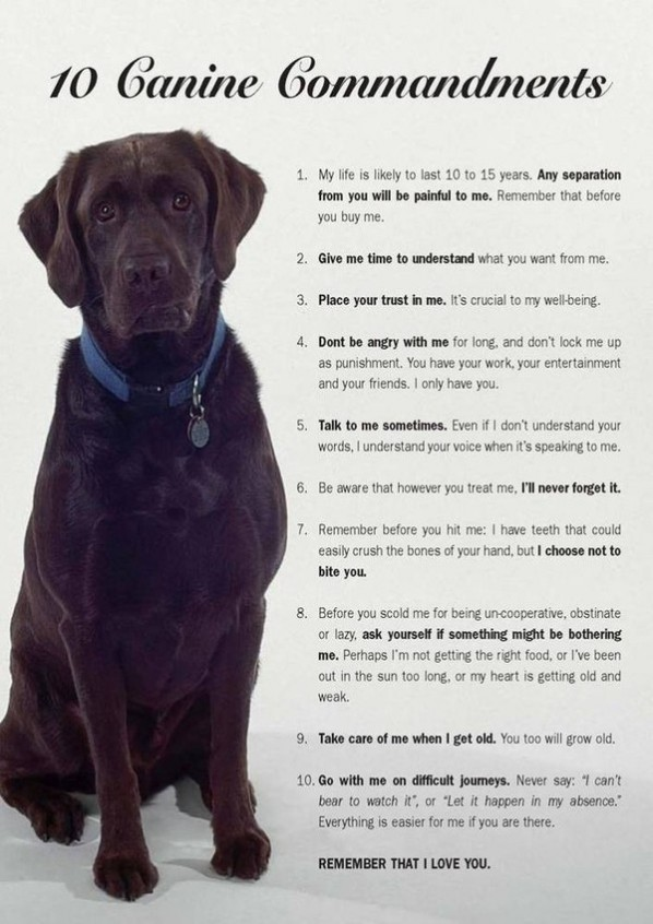 dog commandments