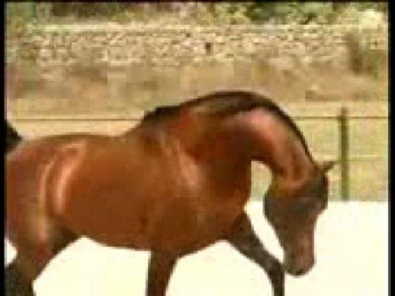horse link