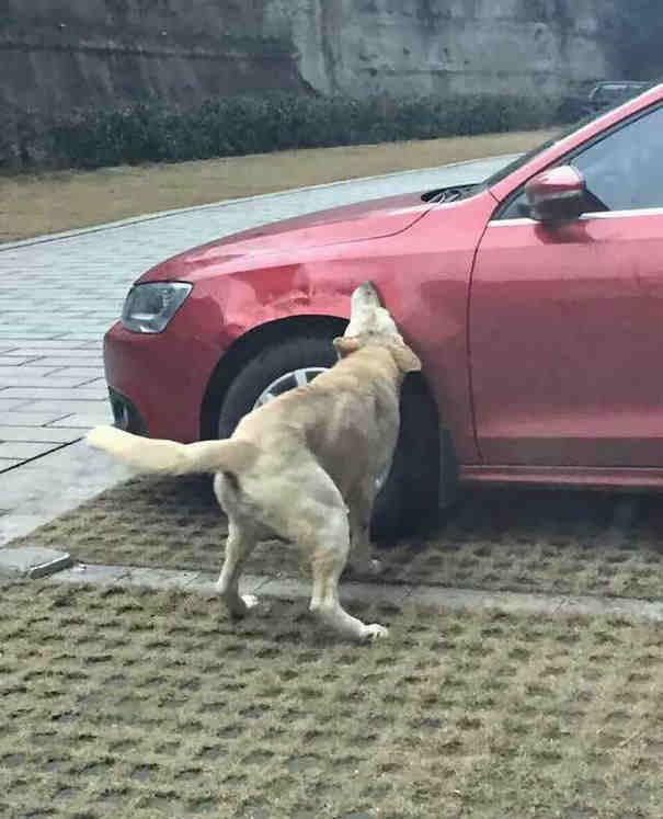 A Driver Kicked This Stray Dog Out Of The Parking Lot The Dog