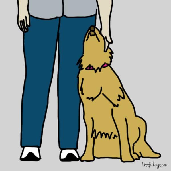 ama dog 3