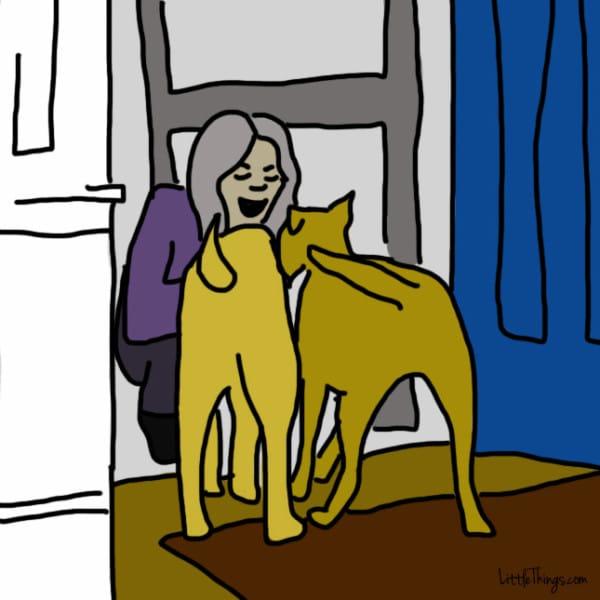ama dog 7