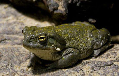 frogg2