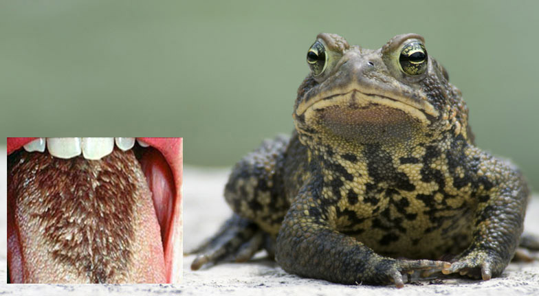 frogg6