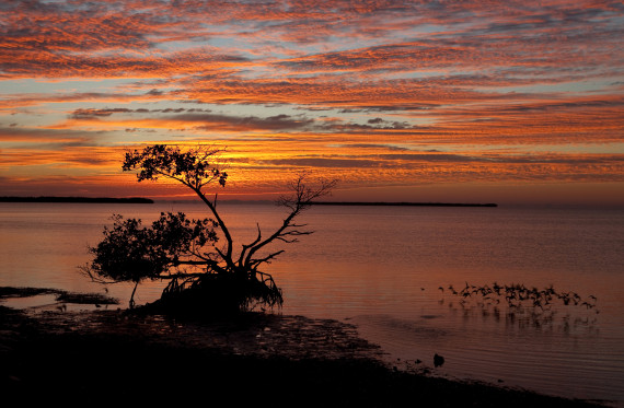 Sunrise Over Florida Everglades National Park