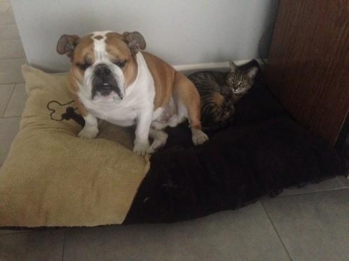 dogsandcats18