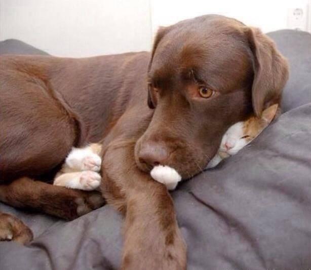 dogscat12