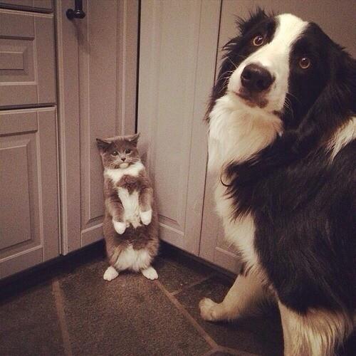 dogscat13