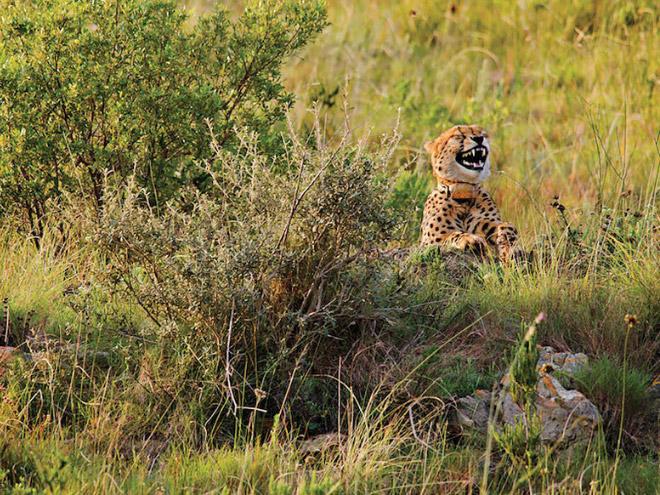 wildlife13